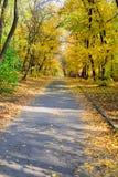 Avenida da árvore fotografia de stock royalty free