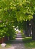 Avenida da árvore Imagem de Stock Royalty Free