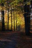 Avenida da floresta nas cores fotos de stock royalty free