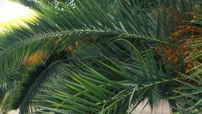 Avenida da palma no parque da cidade stadikam 4k, lento-movimento filme
