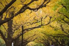 A avenida da rua da nogueira-do-Japão em Meiji Jingu Gaien Park imagens de stock