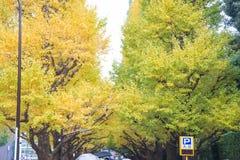 A avenida da rua da nogueira-do-Japão em Meiji Jingu Gaien Park fotos de stock royalty free