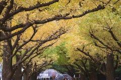 A avenida da rua da nogueira-do-Japão em Meiji Jingu Gaien Park fotos de stock