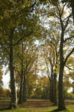 Avenida das árvores Fotos de Stock Royalty Free