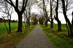 Avenida das árvores de folhas mortas foto de stock
