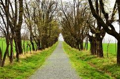 Avenida das árvores de folhas mortas na mola imagem de stock royalty free