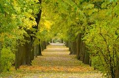 Avenida das árvores no parque Imagem de Stock Royalty Free