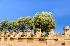 Avenida das esfinges RAM-dirigidas em um templo de Karnak Luxor, Egipto fotografia de stock royalty free