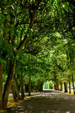 Avenida de árboles Imagen de archivo libre de regalías