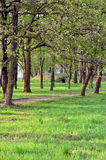 Avenida de árboles Imagenes de archivo