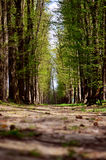 Avenida de árboles Fotos de archivo libres de regalías