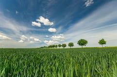 Avenida de árboles en un campo de la primavera Imágenes de archivo libres de regalías