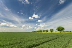 Avenida de árboles en un campo de la primavera Foto de archivo