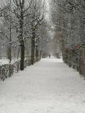Avenida de árboles, parque, invierno Nevado imágenes de archivo libres de regalías