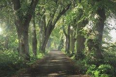 Avenida de árboles y del camino de la grava imagenes de archivo