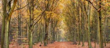 Avenida de árvores do outono foto de stock royalty free