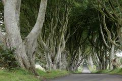 Avenida de conversão escuras das árvores na Irlanda fotografia de stock