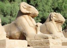 Avenida de esfinges con la cabeza del espolón en Luxor Foto de archivo libre de regalías