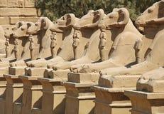 Avenida de esfinges en Luxor, Egipto fotos de archivo libres de regalías