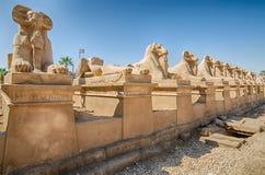 Avenida de esfinges RAM-dirigidas em Karnak, Egito imagens de stock