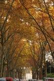 Avenida de la castaña-linged Fotografía de archivo libre de regalías