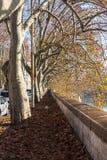 Avenida de la haya foto de archivo libre de regalías