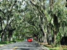Avenida de la magnolia Foto de archivo libre de regalías