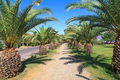 Avenida de la palma Foto de archivo libre de regalías