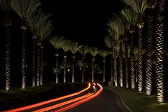 Avenida de la palma imagen de archivo libre de regalías