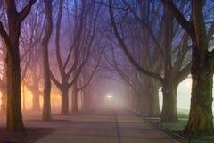 Avenida de los árboles planos en la noche, ciudad de Szczecin (Stettin) Foto de archivo