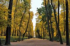 Avenida de parque Imagens de Stock