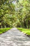 Avenida de robles en Boone Hall Plantation Imagen de archivo