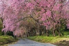 Avenida de Sakura Fotografía de archivo