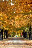 Avenida debajo de los árboles Imagen de archivo