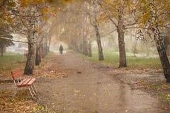 Avenida del abedul del otoño Foto de archivo libre de regalías