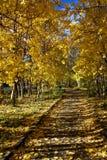 Avenida del otoño Imagen de archivo