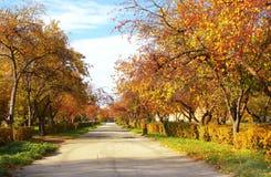 Avenida del otoño Fotografía de archivo libre de regalías