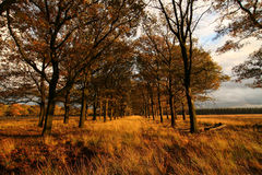 Avenida del otoño Foto de archivo