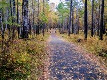 Avenida del otoño Foto de archivo libre de regalías