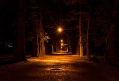 Avenida del plumón de luces de la noche de árboles Imagenes de archivo