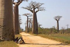 Avenida do baobab perto de Morondava imagem de stock royalty free