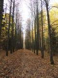 Avenida do carvalho do outono a folha caída-para baixo Fotografia de Stock Royalty Free