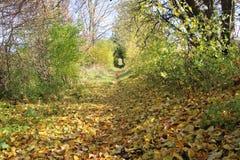 Avenida do outono imagens de stock