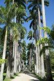 Avenida do Rio do jardim botânico de palmas reais foto de stock royalty free