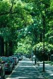 Avenida do verão da universidade de Sichuan Imagem de Stock Royalty Free