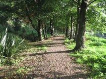 Avenida en el bosque foto de archivo