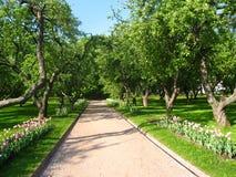 Avenida en jardín de la manzana. Foto de archivo libre de regalías
