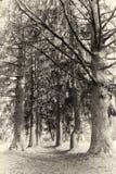 Avenida en los árboles Imagen de archivo