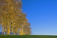 Avenida en otoño Fotografía de archivo libre de regalías
