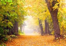 Avenida en otoño Imagen de archivo